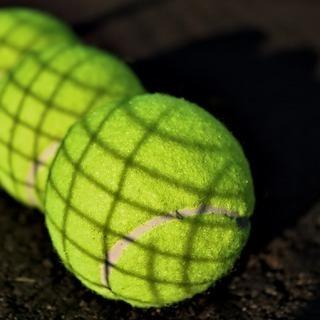 テニスサークルにどっぷり4年間浸かった僕が、新入生の為に、独断と偏見でテニサーを概観していく